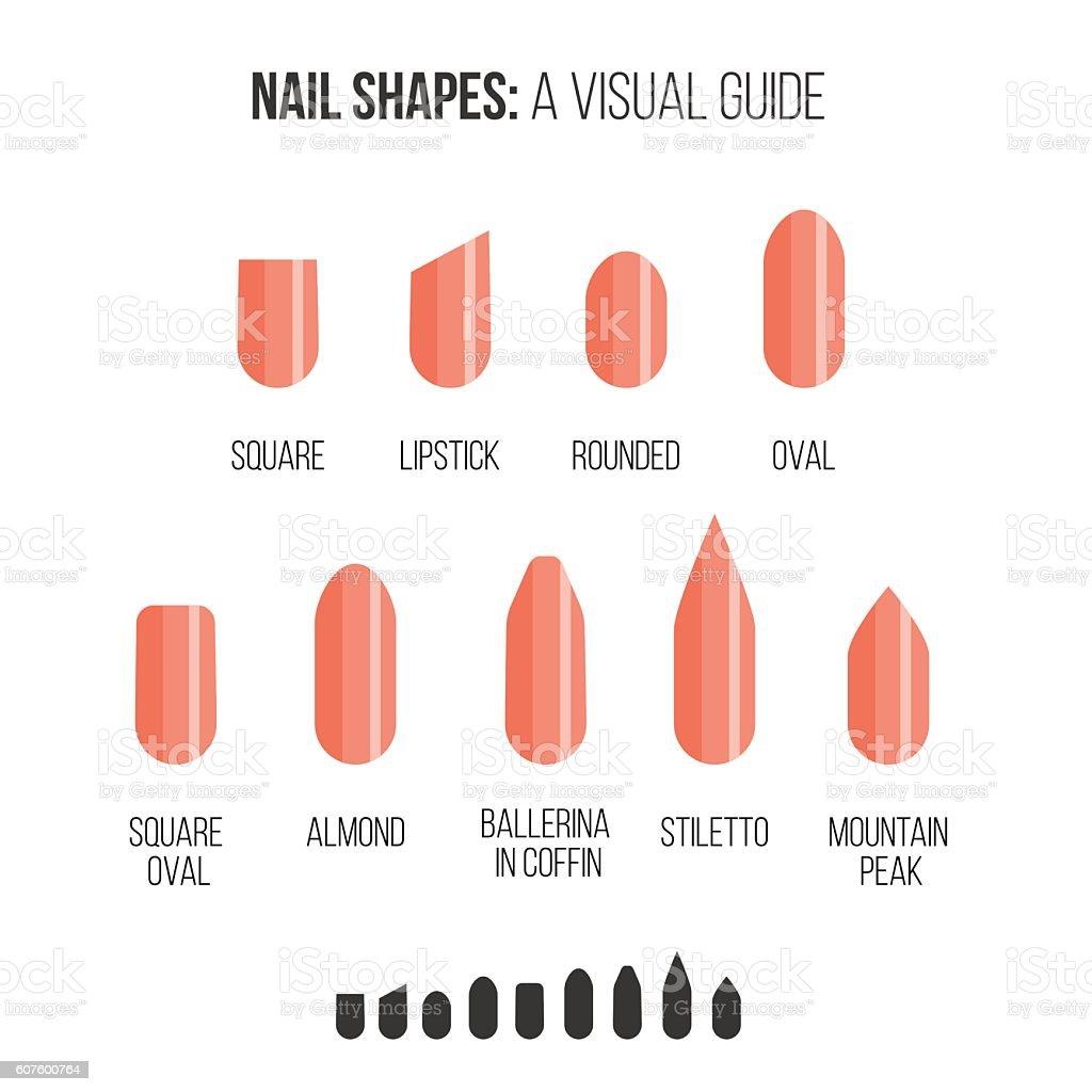 Visual guide. royalty-free nail shapes visual guide stock vector art