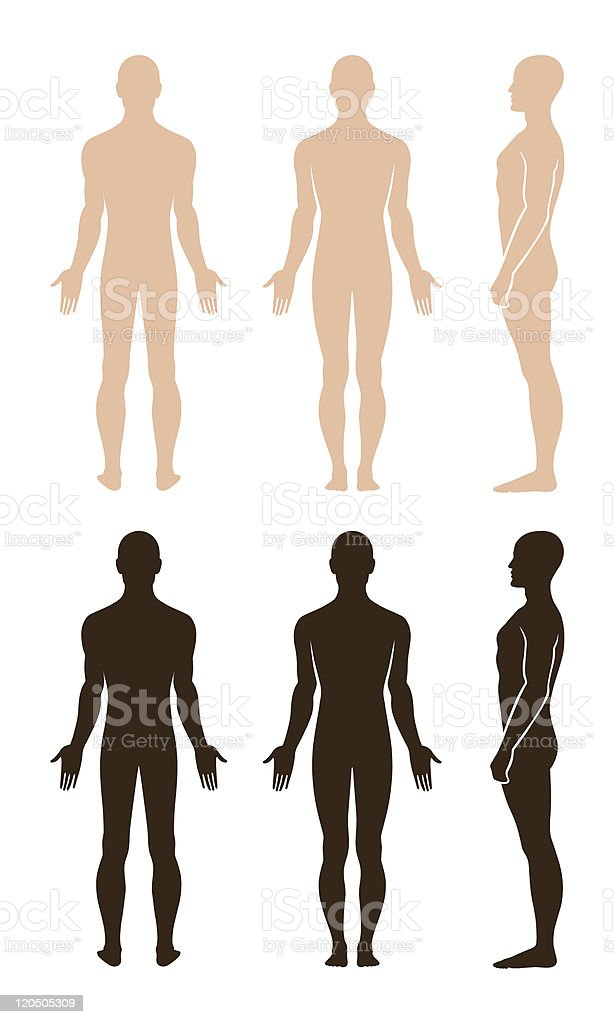 Naked standing man royalty-free stock vector art