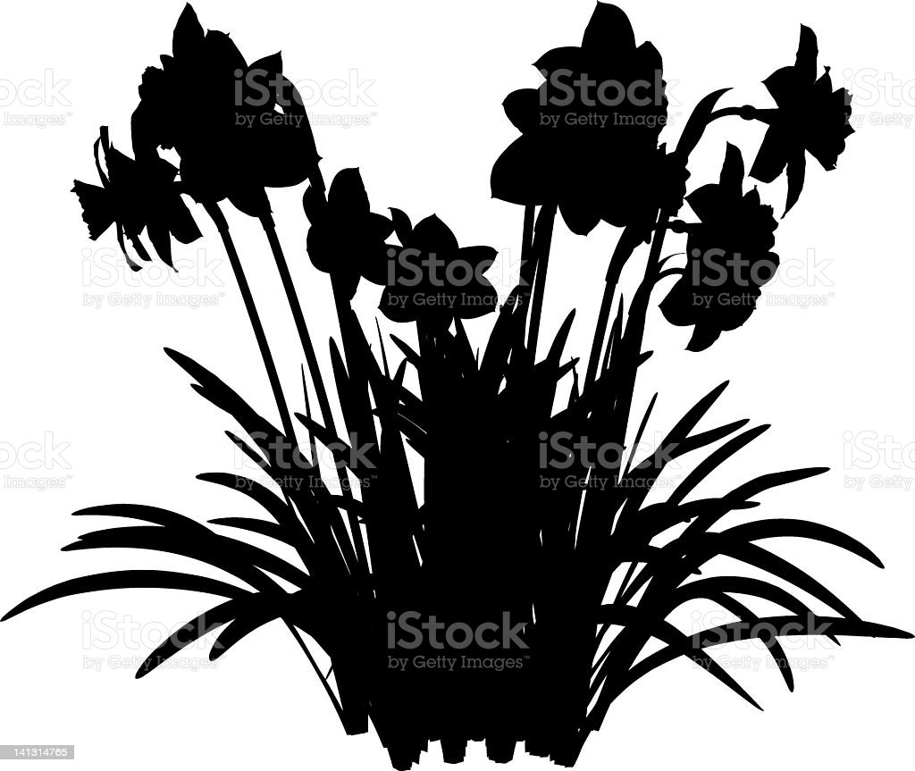 Narcissus silhouette vector art illustration