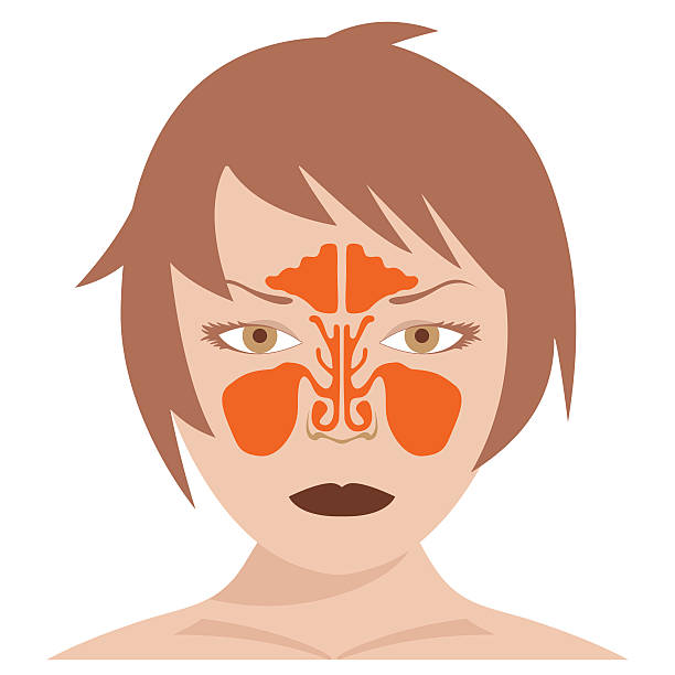 nasal and frontal sinus vector image of nasal and frontal sinus. woman model on white background. septum stock illustrations
