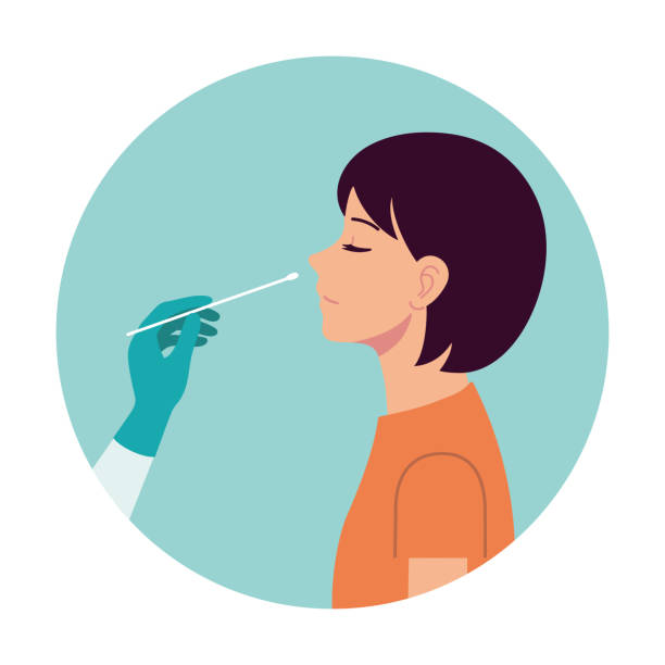 Nasal swab laboratory test,Study of patients stock illustration, Medical Test, Nose, Scientific Experiment, Cotton Swab, Virus Nasal swab test. Diagnosis of corona virus. A doctor wearing medical gloves conducts the analysis from the person's nose. Hospital lab. A person expresses a test. Flat vector. scientific experiment stock illustrations