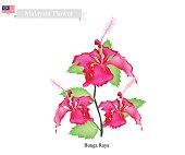 National Flower of Malaysia, Bunga Raya or Hibiscus Flowers