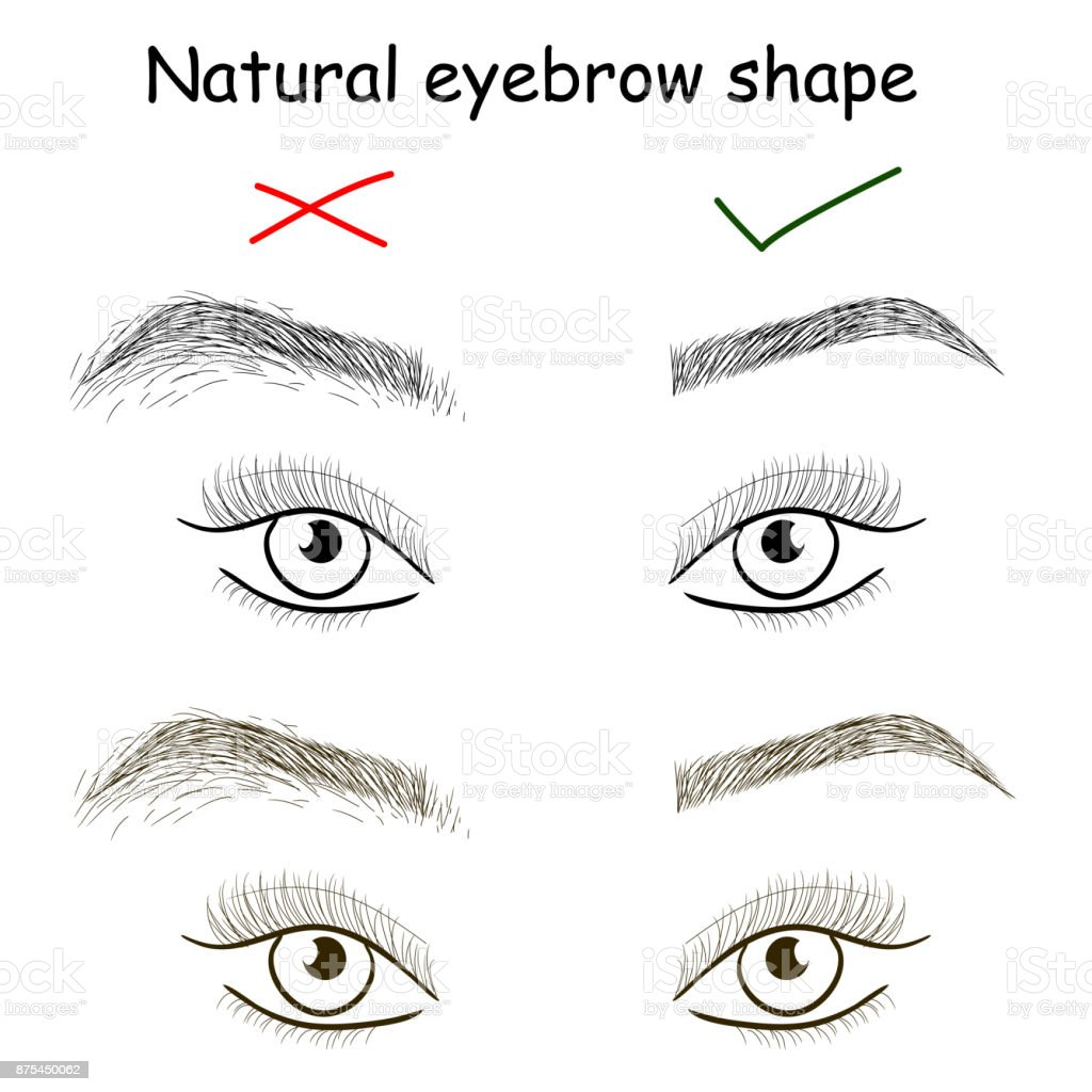 Natural Eyebrow Shape Right And Wrong Brows Stock Vector Art More
