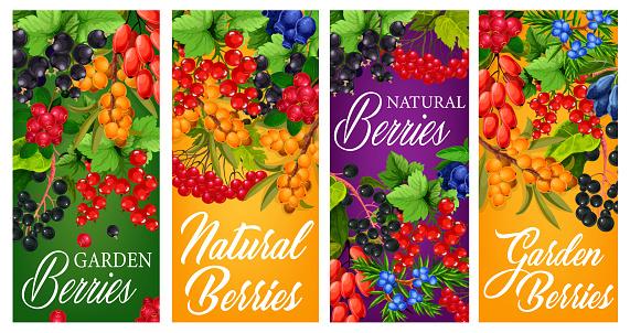 Natural garden berries harvest vector posters