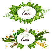 Spices, herbs and organic seasonings. Vector farm market sorrel, dill or parsley and leek, natural radish and poppy seeds, spinach or peppermint with garlic