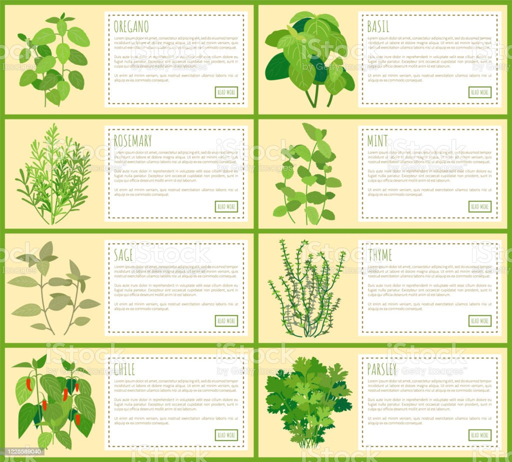 Natural Herbal Spices With Description Banners Set Stock Illustration Download Image Now Istock