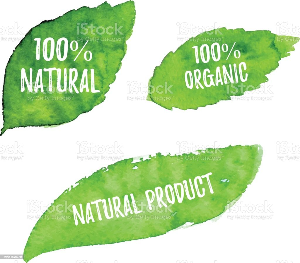 100% natural, organic, natural product ecology nature design. Vector green watercolor leaves, natural, organic, bio, eco label and shape on white background. Hand drawn stain. vector art illustration