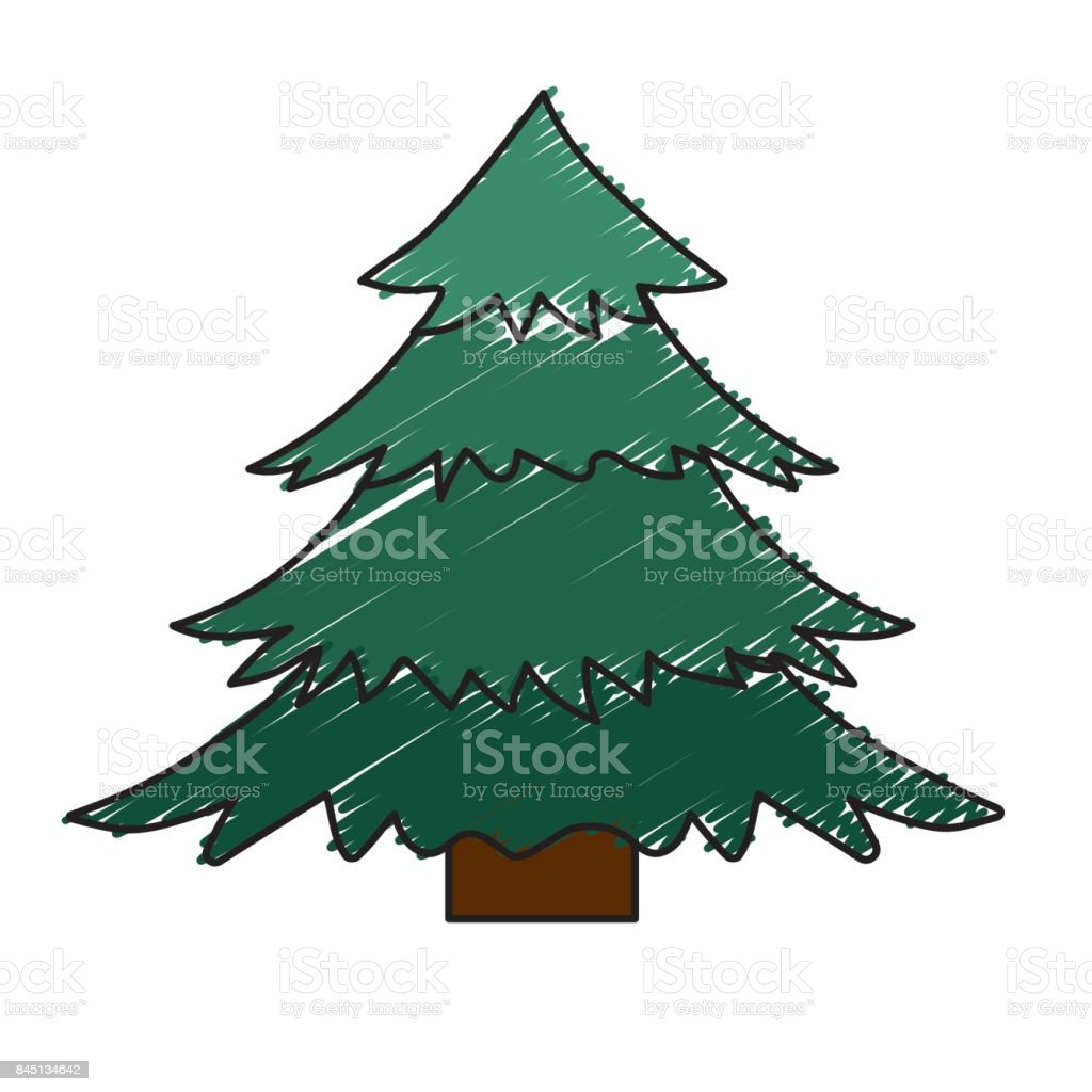 natural pine tree with branches design vector art illustration