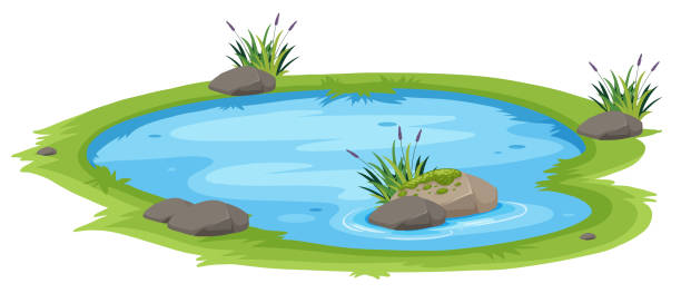 a natural pond on white background - pond stock illustrations