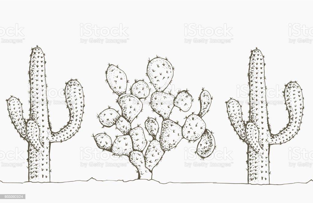 Wunderbar Anatomie Eines Kaktus Galerie - Menschliche Anatomie ...