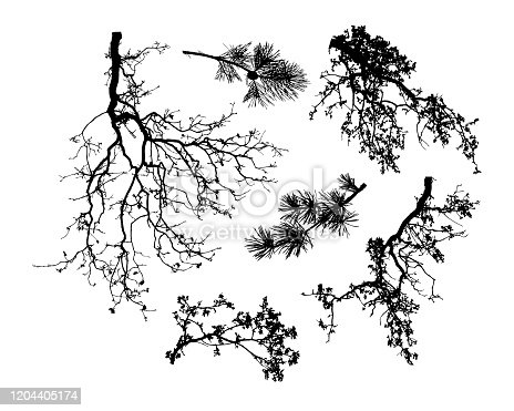 Natural set of tree branches silhouette  (Vector illustration).