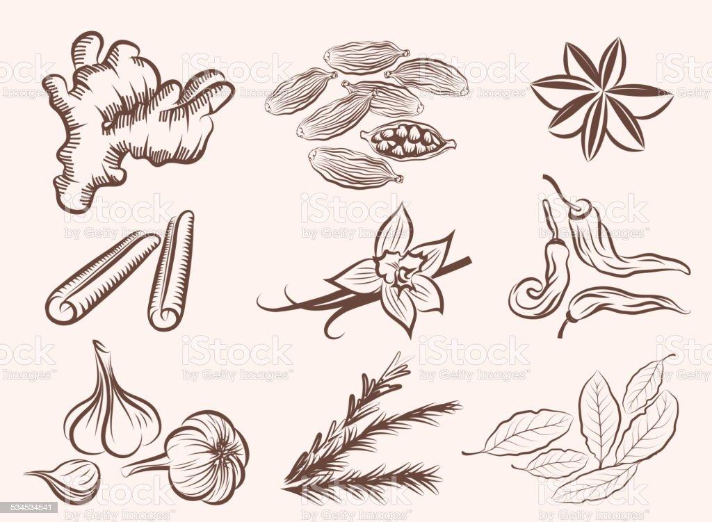 natural spices vector art illustration
