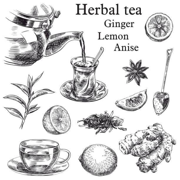 illustrazioni stock, clip art, cartoni animati e icone di tendenza di tè naturale, limone e zenzero e anice stellato - camellia sinensis