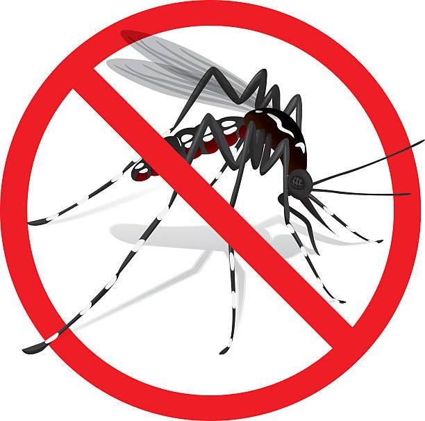 illustrazioni stock, clip art, cartoni animati e icone di tendenza di natura, zanzara della febbre gialla con divieto di zanzara cavaliere d'italia - zanzare