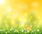 Spring or summer background, sunny day with flowers and grass, illustration.