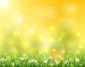 自然と草の上太陽