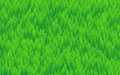 Vector Nature Background, Forest, Trees And Grass