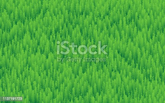 Nature Background, Forest, Trees And Grass