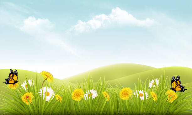 Nature background with grass and flowers and butterflies. Vector. vector art illustration