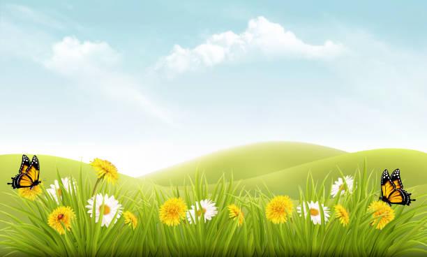illustrations, cliparts, dessins animés et icônes de fond de nature avec l'herbe et des fleurs et des papillons. vector. - printemps