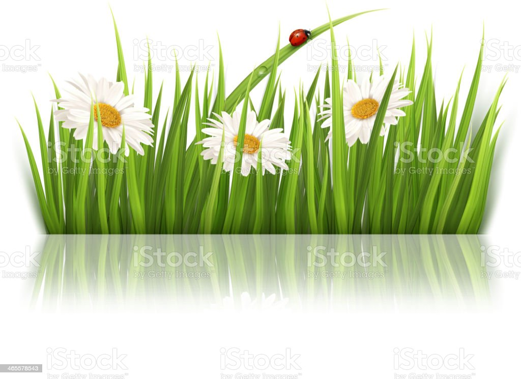 Nature background with green grass and flowers royalty-free stock vector art