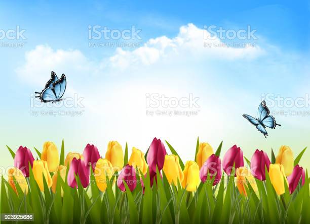 Nature background with green grass flowers and a butterfly vector vector id923925686?b=1&k=6&m=923925686&s=612x612&h=w8orbynrby4juvglmmzok2ftsxa5whvccdcaeogr6dm=