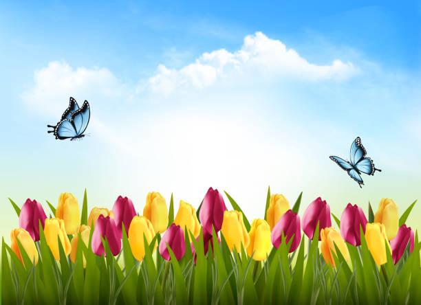 bildbanksillustrationer, clip art samt tecknat material och ikoner med natur bakgrund med grönt gräs, blommor och en fjäril. vektor. - tulpaner