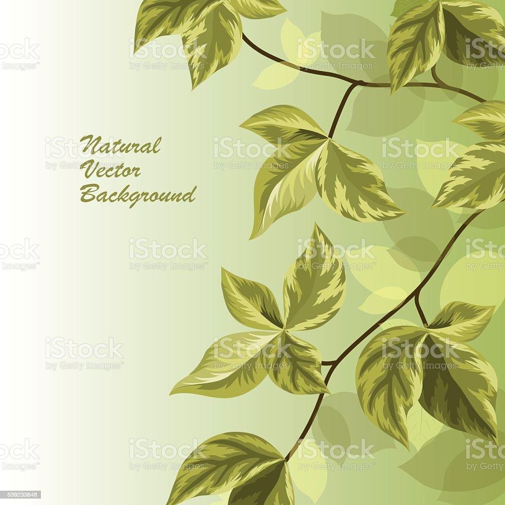 Naturaleza fondo con hojas verdes. ilustración de naturaleza fondo con hojas verdes y más banco de imágenes de abstracto libre de derechos