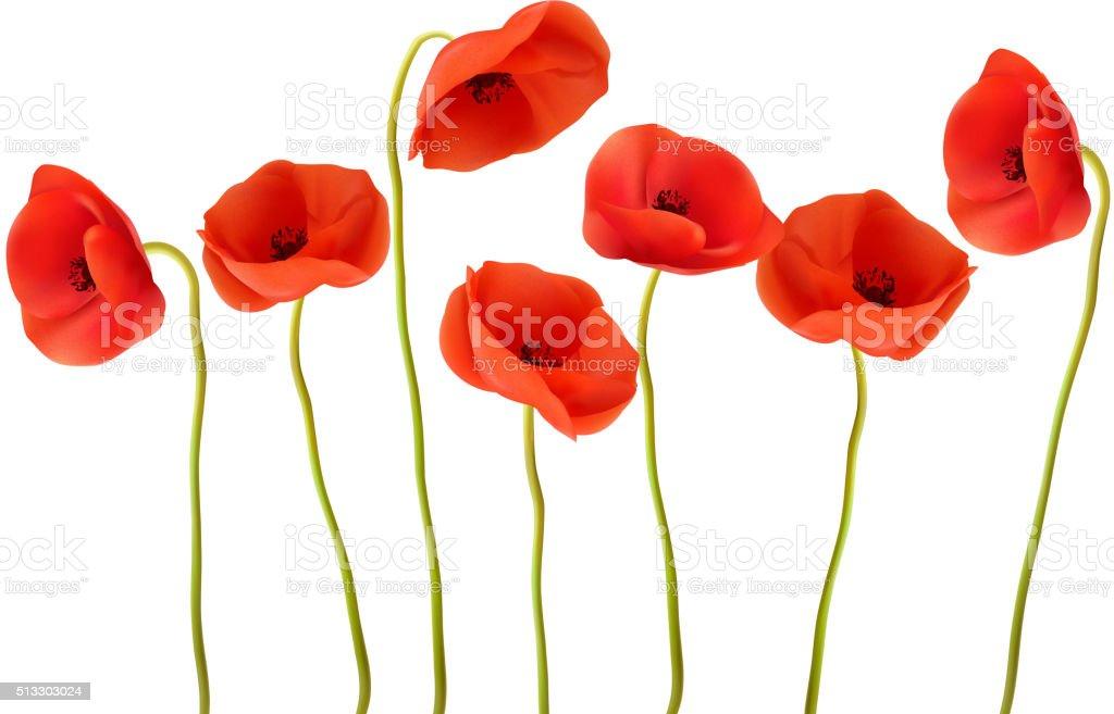 Naturaleza fondo con rojo amapolas. Vector de. - ilustración de arte vectorial