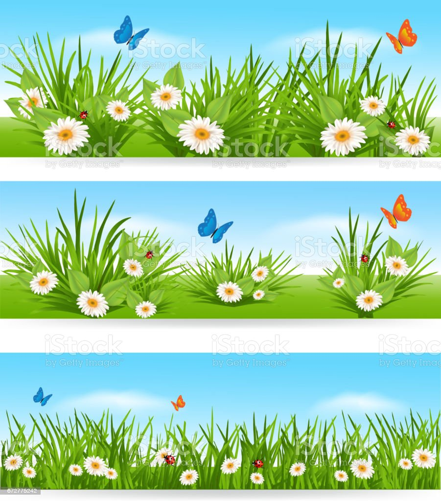 green grass blue sky flowers back ground nature banners with blue sky green grass and flowers royaltyfree nature banners with blue sky green grass and flowers stock vector