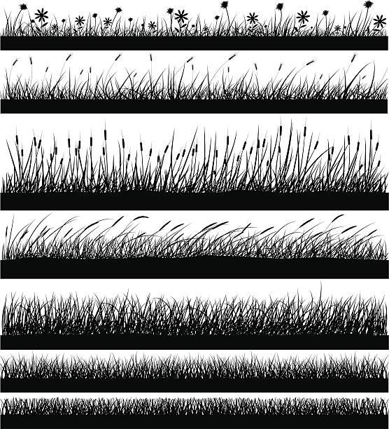 stockillustraties, clipart, cartoons en iconen met nature elements - grass - wheat field