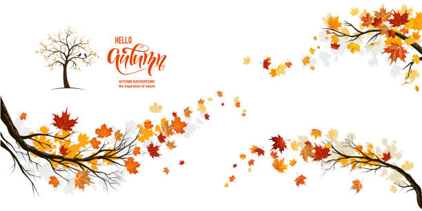 Nature fall branches Autumn nature design elements. Tree, branch with leaves, fall decor. Maple leaves design. fall background stock illustrations