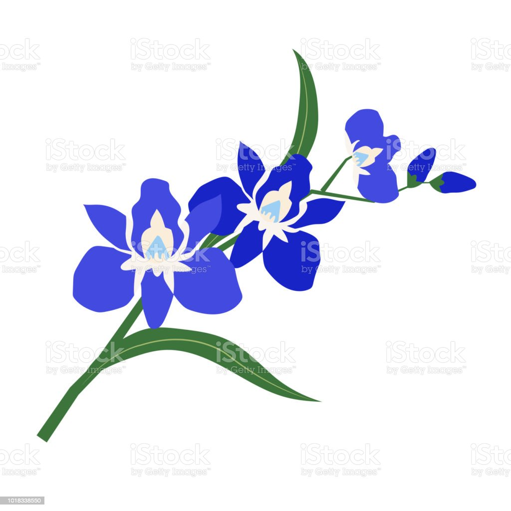 Orquídea de naturaleza flor azul, planta de hoja floral de jardín botánico de vector. - ilustración de arte vectorial