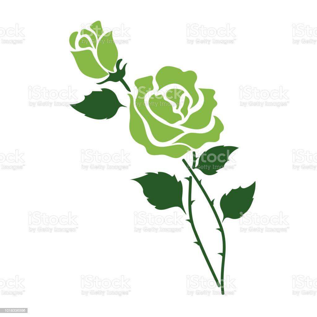 Naturaleza flor verde color de rosa, planta de hoja floral de jardín botánico de vector. - ilustración de arte vectorial