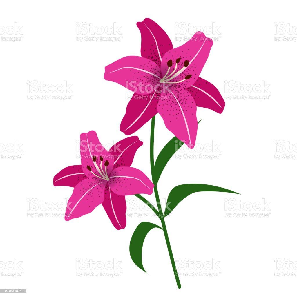 Naturaleza flor magenta lirio de tigre, planta de hoja floral de jardín botánico de vector. - ilustración de arte vectorial