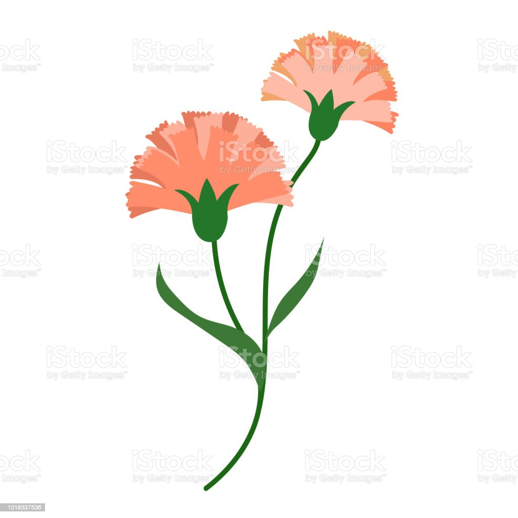 Claveles de flor naranja naturaleza, planta de hoja floral de jardín botánico de vector. - ilustración de arte vectorial