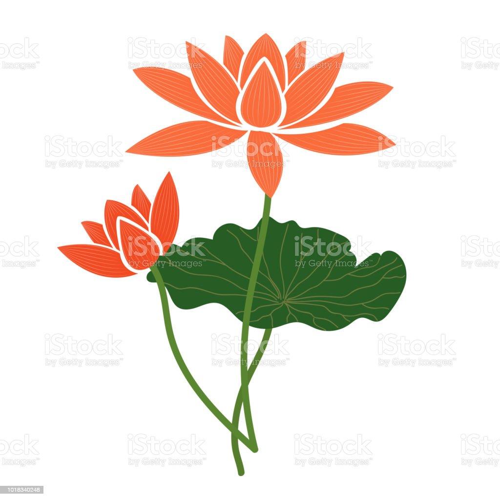 Naturaleza flor naranja de loto, planta de hoja floral de jardín botánico de vector. - ilustración de arte vectorial