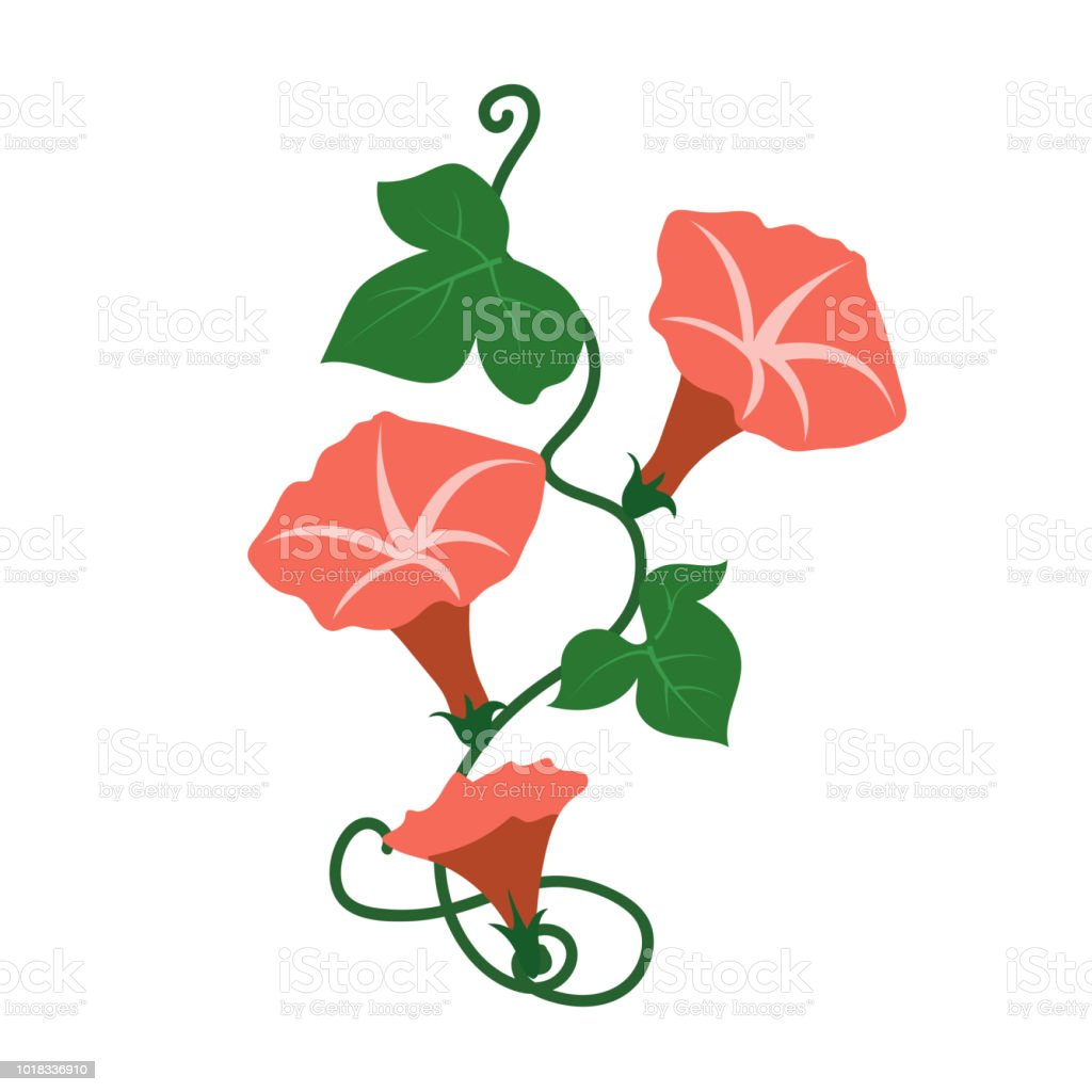 Naturaleza flor campanilla naranja flor, planta de hoja floral de jardín botánico de vector. - ilustración de arte vectorial