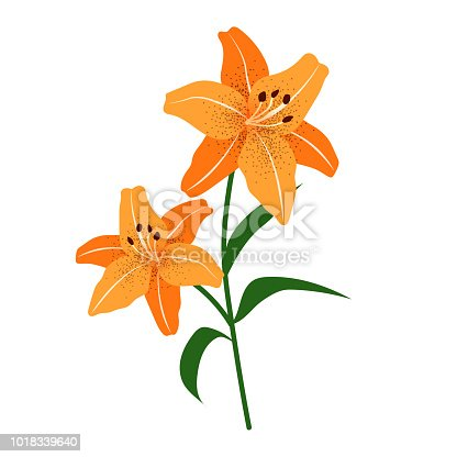 Nature flower orange tiger lily, vector botanic garden floral leaf plant.
