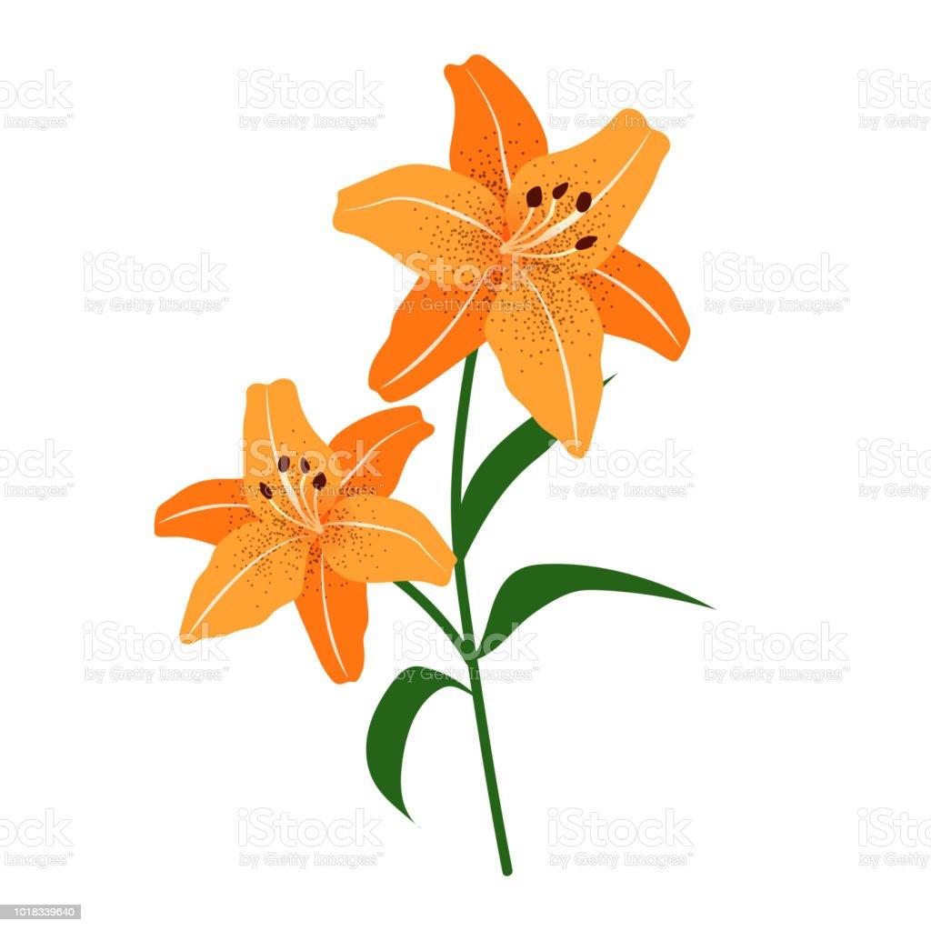 Naturaleza flor naranja lirio de tigre, planta de hoja floral de jardín botánico de vector. - ilustración de arte vectorial