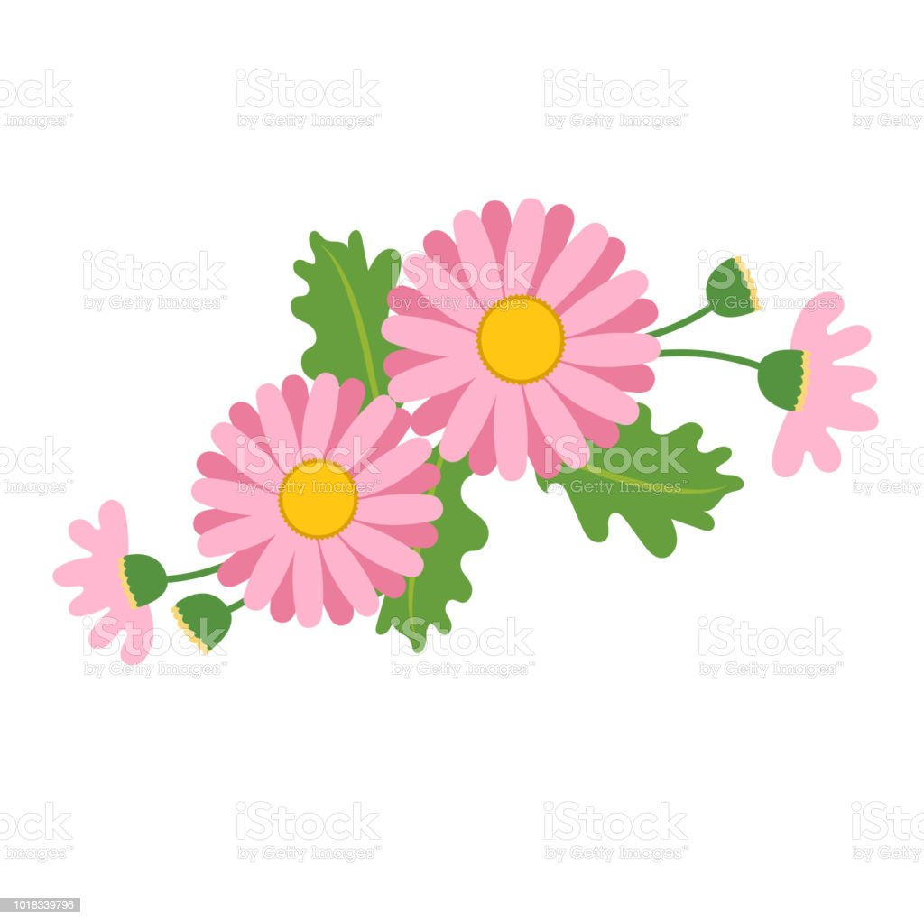 Naturaleza flor rosa tipo Margarita, planta de hoja floral de jardín botánico de vector. - ilustración de arte vectorial