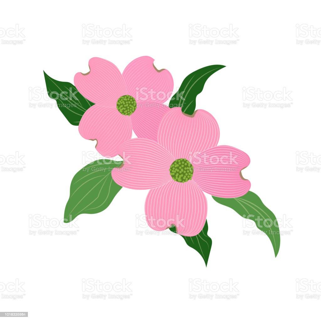 Nature Flower Pink Dogwood Cornus Florida Vector Botanic Garden