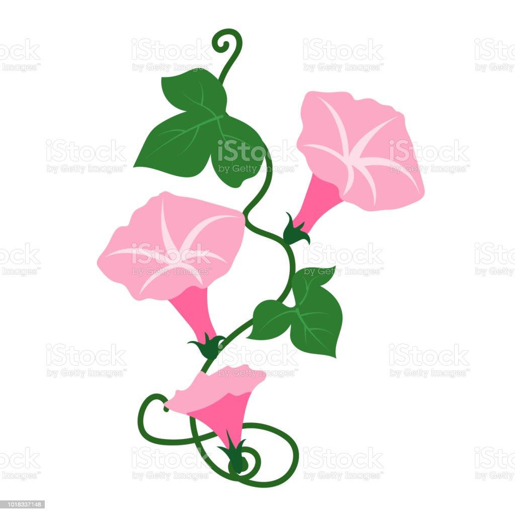 Naturaleza flor campanilla rosa flor, planta de hoja floral de jardín botánico de vector. - ilustración de arte vectorial