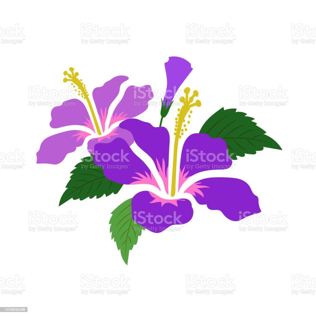 Hibisco de flor púrpura de naturaleza, planta de hoja floral de jardín botánico de vector. - ilustración de arte vectorial