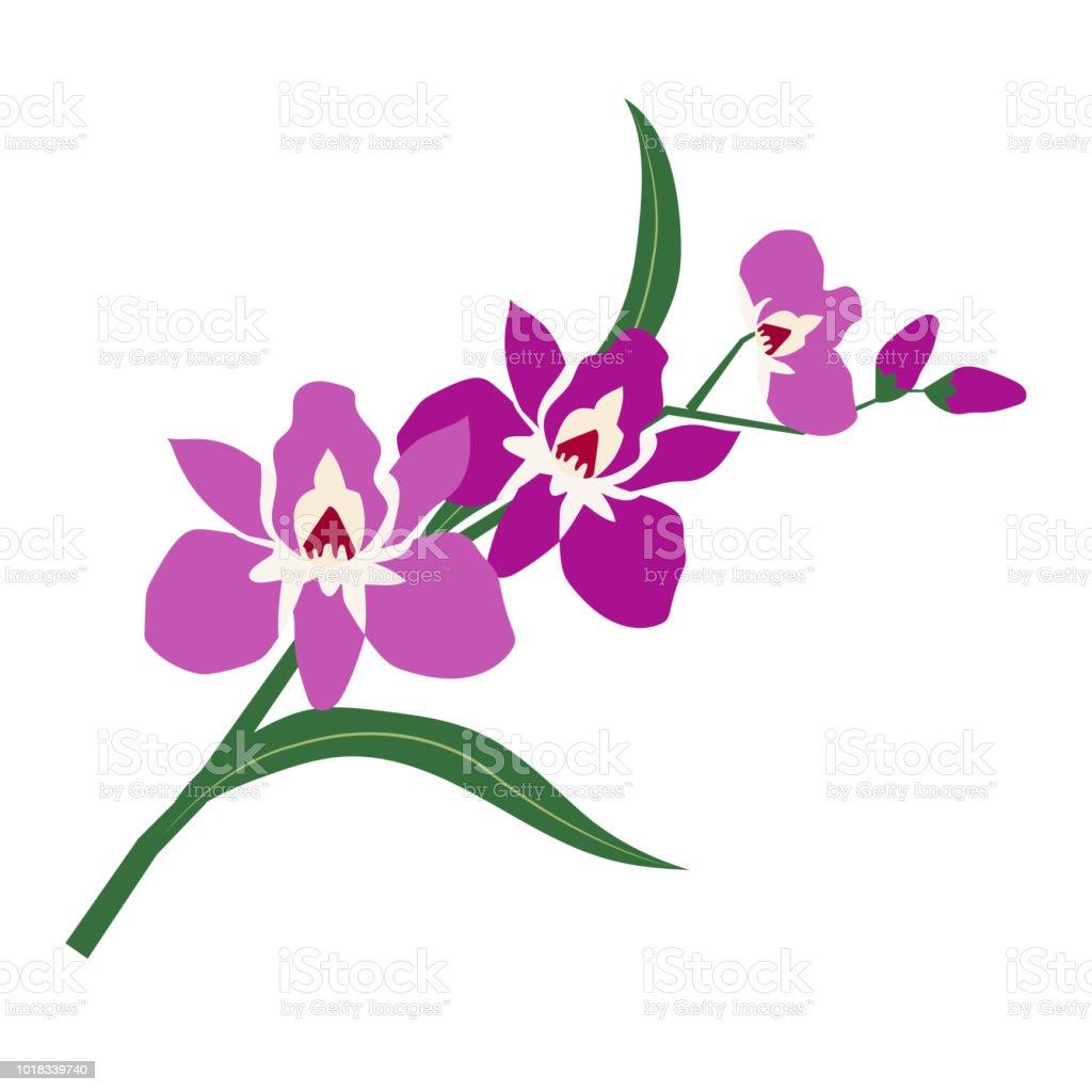 Orquídea de flor púrpura de naturaleza, planta de hoja floral de jardín botánico de vector. - ilustración de arte vectorial