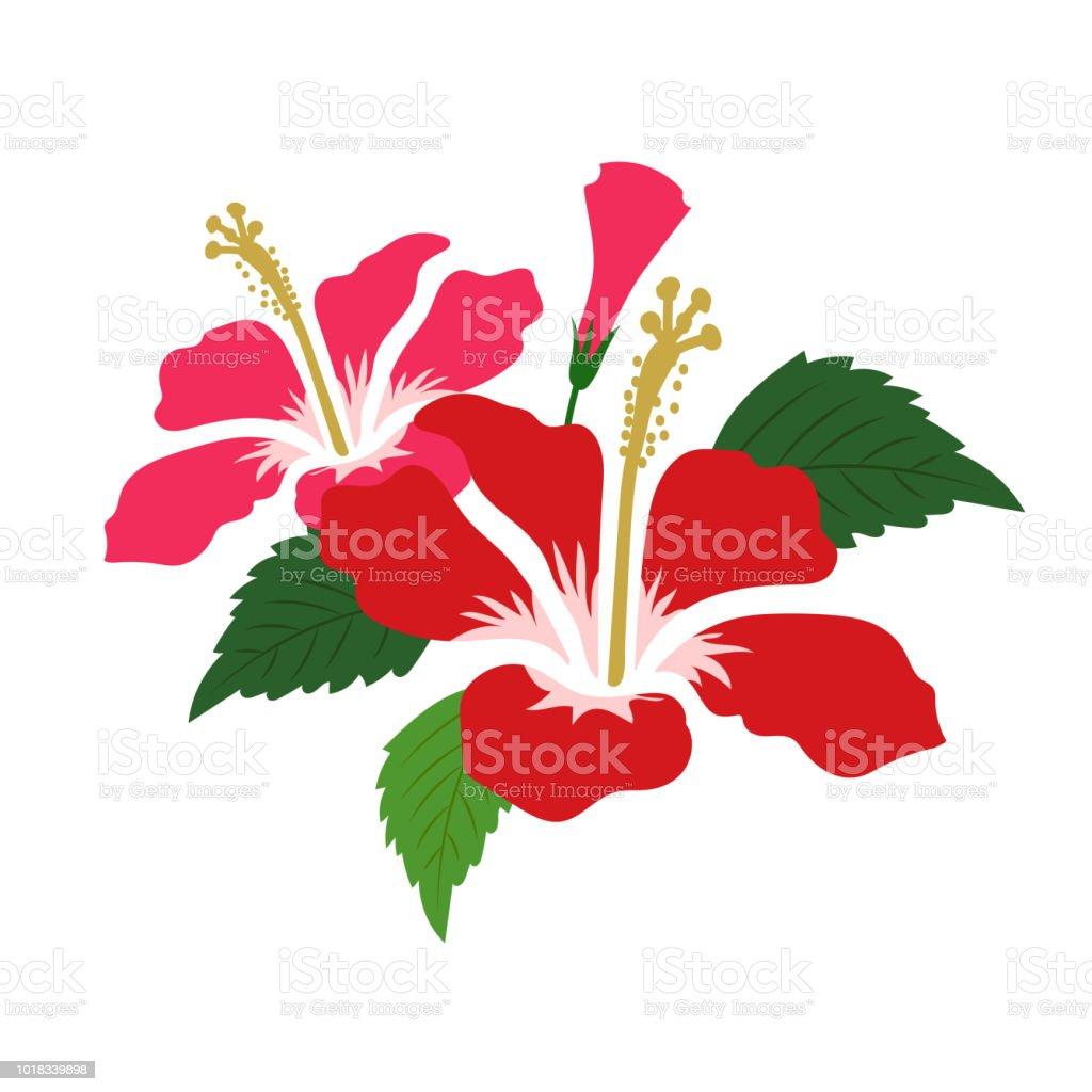Hibisco de flor roja naturaleza, planta de hoja floral de jardín botánico de vector. - ilustración de arte vectorial
