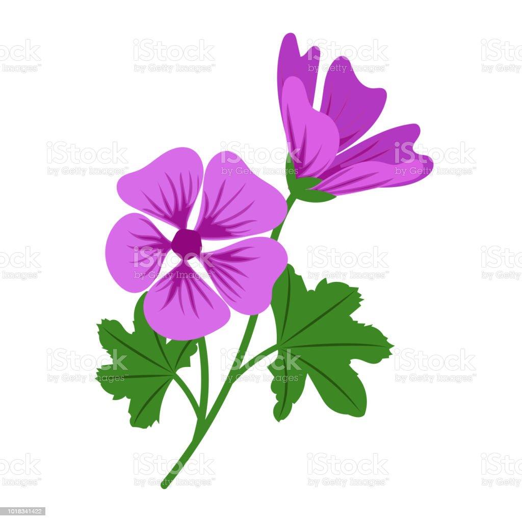 garten blumen lila, natur blume lila malve vektor botanischer garten blumen blatt, Design ideen