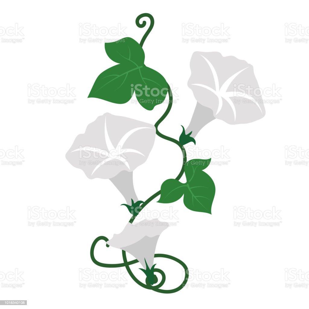 Naturaleza flor campanilla blanca flor, planta de hoja floral de jardín botánico de vector. - ilustración de arte vectorial