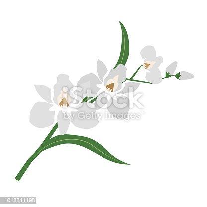 Nature flower white orchid, vector botanic garden floral leaf plant.
