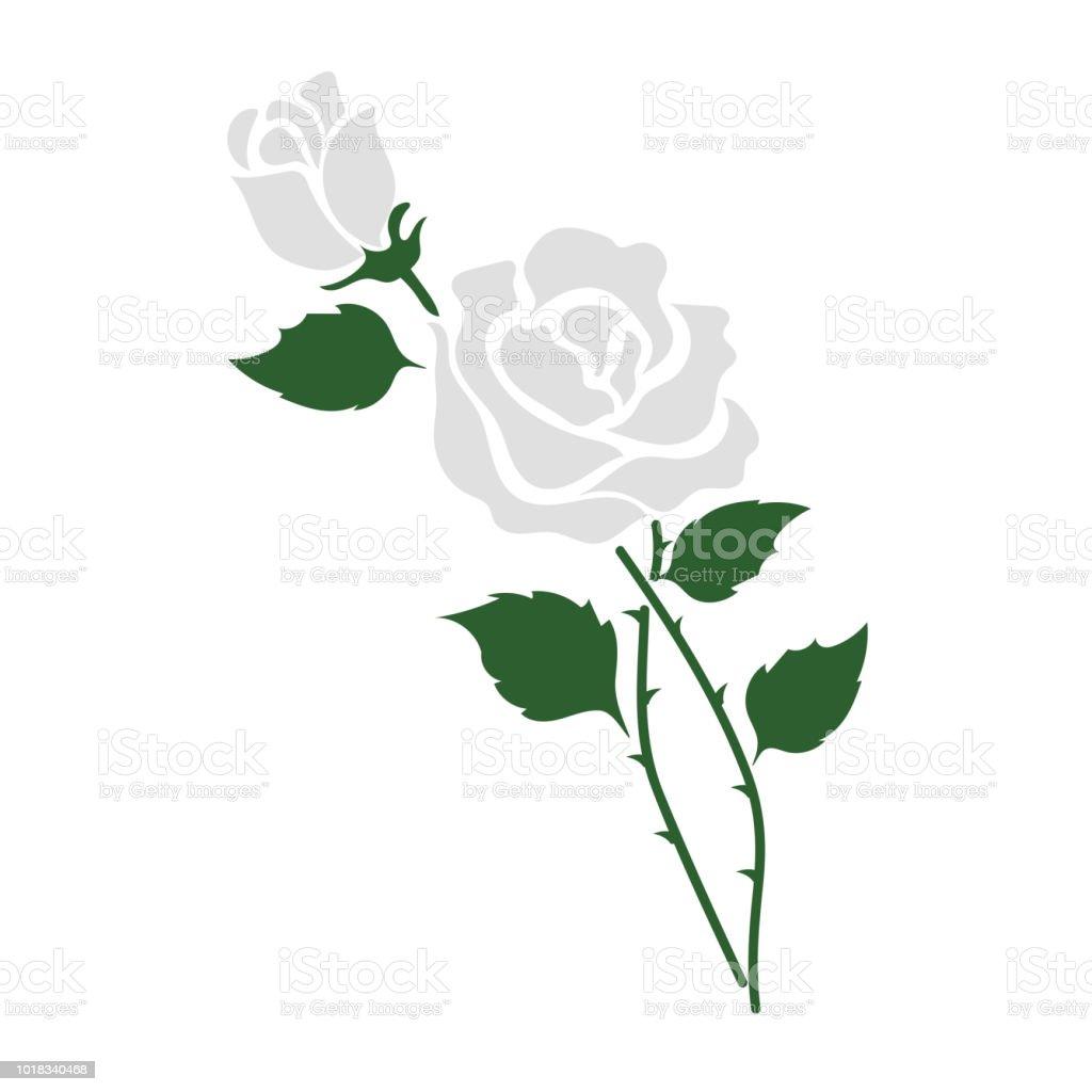 Naturaleza flor blanco se levantó, planta de hoja floral de jardín botánico de vector. - ilustración de arte vectorial